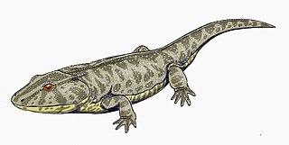 Lydekkerinidae family of amphibians (fossil)