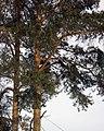 Lyovintsy, Kirovskaya oblast', Russia, 612079 - panoramio (65).jpg