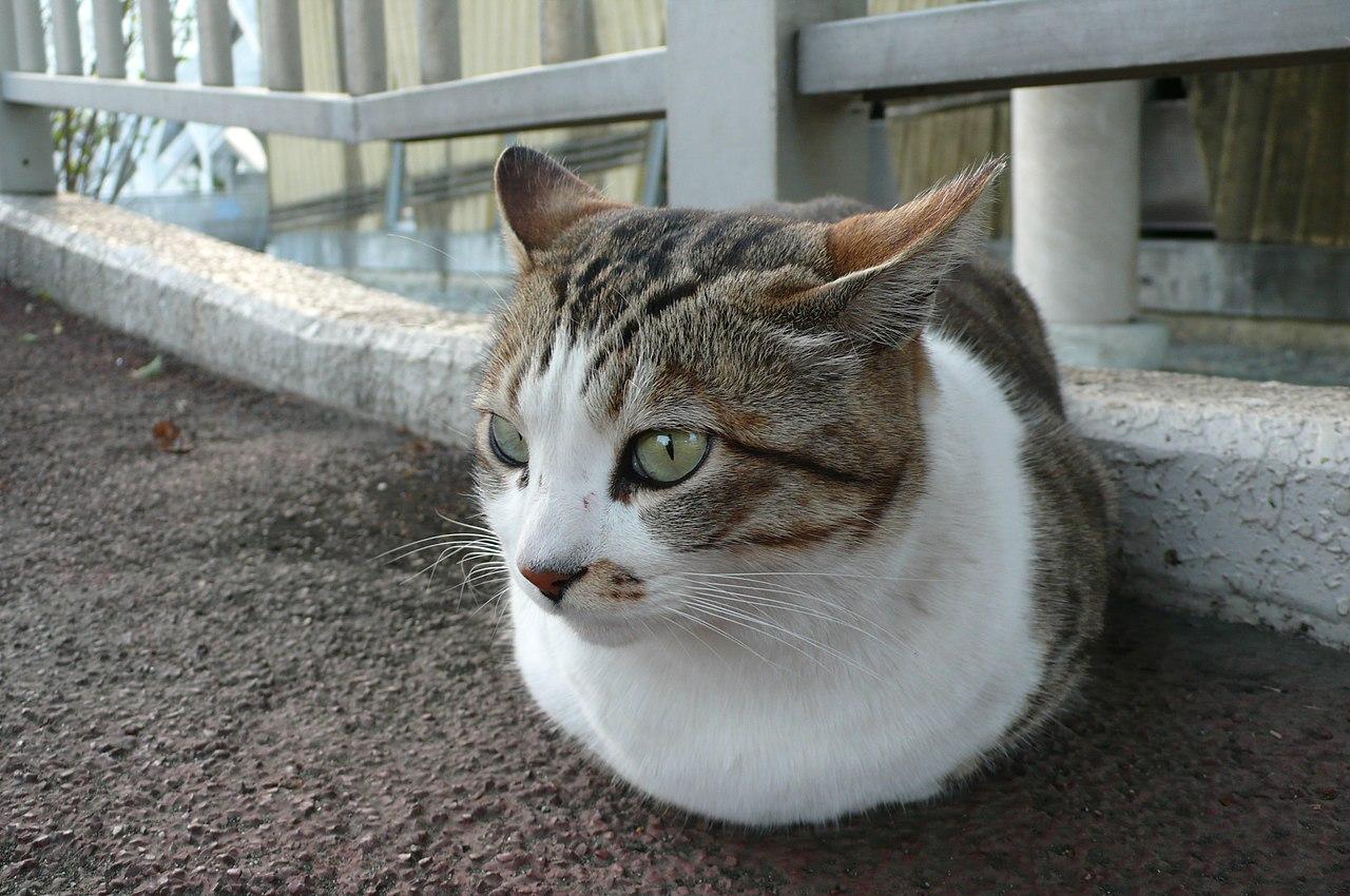 Dark Gray Cat With Green Eyes