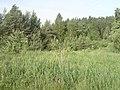 Mahilyow District, Belarus - panoramio (51).jpg