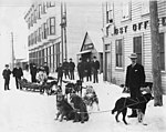 Mail being delivered by dog sled outside the Post Office, next to Nowell Photography studio, Nome, Alaska, December 16, 1905 (AL+CA 7519).jpg