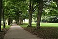 Maker with Rame, tree-lined avenue - geograph.org.uk - 968474.jpg
