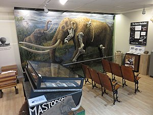 Manis Mastodon Site - The Manis Mastodon exhibit at the Museum and Arts Center, Sequim, Washington.