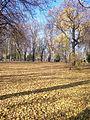 Mariinsky park in the autumn. Fallen leaves(3).jpg