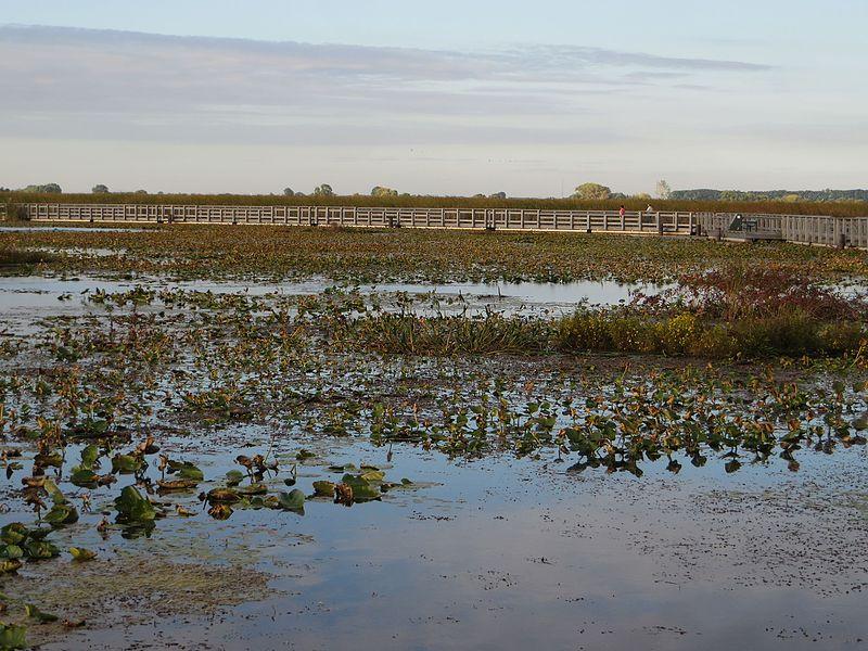 File:Marsh Boardwalk, Point Pelee National Park, Leamington, Ontario, Canada (21762675232).jpg