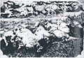 Massacred corpses of Japanese victims of the Tungchow Massacre 2.jpg
