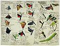 Max Gabriel von Schmetterlinge und Raupen Muenchen.jpeg