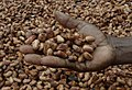 Medium close up image of David Kebu Jnr holding cocoa beans drying in the sun. (10703178735) (cropped).jpg