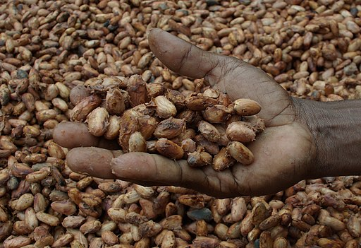 Medium close up image of David Kebu Jnr holding cocoa beans drying in the sun. (10703178735) (cropped)
