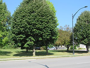 Miller Building (Davenport, Iowa) - The building was located somewhere near this grove of trees.