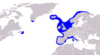 Common ling species of fish