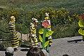 Monarchs Among the Milkweed (6123832321).jpg
