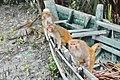 Monkey 04.jpg