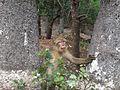 Monkey hiding.jpg