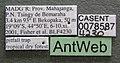 Monomorium termitobium casent0078587 label 1.jpg