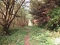 Morfa Harlech Forest - geograph.org.uk - 988845.jpg