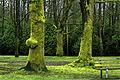 Moss, Jericho Park (2343297715).jpg
