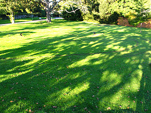 Motorcycle hooliganism - Park lawn damaged by motorcycle hooligans in Victoria, BC.  2007.