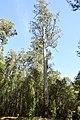 Mount Field National Park 04.jpg