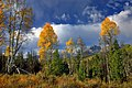Mount Heyburn Autumn.jpg