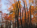 Mount Sterling, North Carolina Fall Foliage.JPG