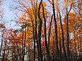 Mount Sterling, North Carolina Fall Foliage.JPG