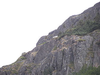 Mountain goat from Klondike Highway, Alaska.jpg
