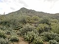 Mt. Pinter Base Loop, Tonto National Forest, Butcher Jones Trail, Fort McDowell, AZ 85264, USA - panoramio (7).jpg