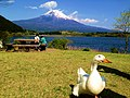 Mt fuji with a duck.JPG
