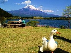 Shizuoka (prefecture)