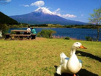 Shizuoka Prefecture - View of Mt. Fuji from Fujinomiya