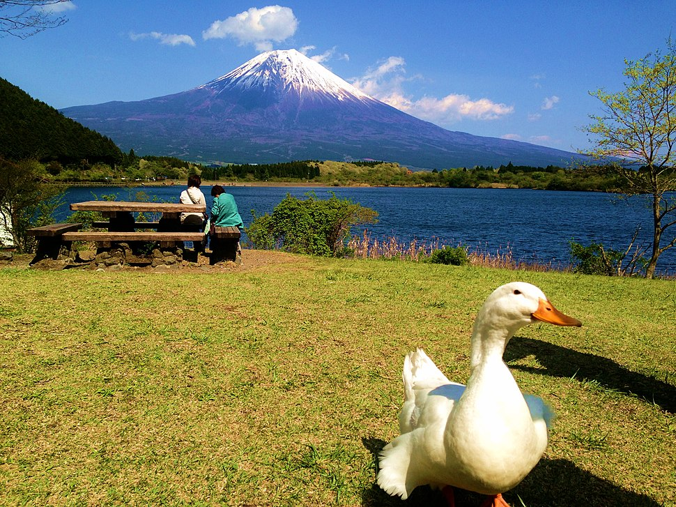 Mt fuji with a duck