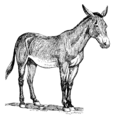 Mule (PSF).png