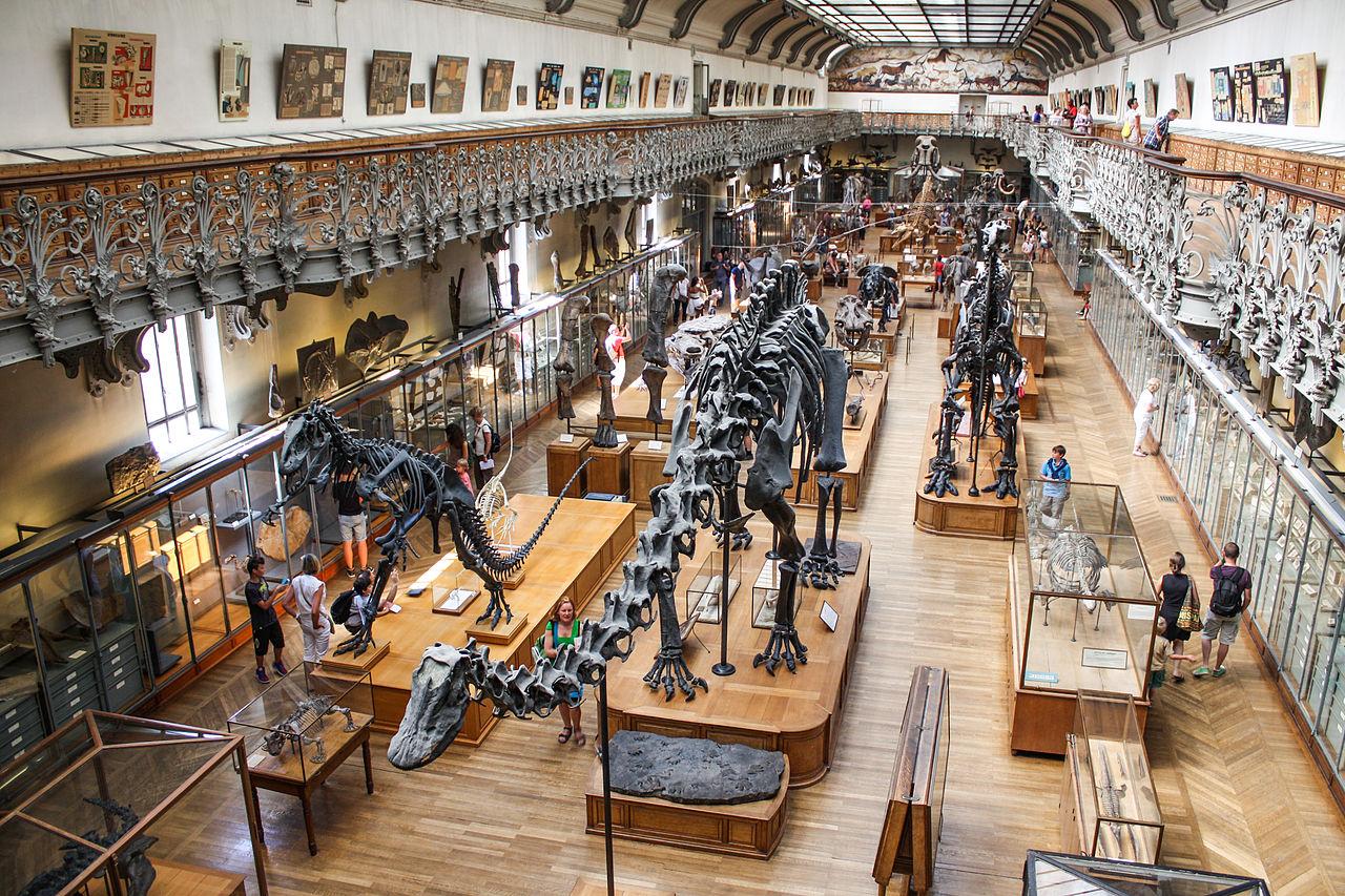 Natural History Museum Paris English