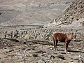 Mustang Horse.jpg