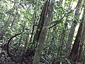 NA SELVA AMAZÔNICA - panoramio (1).jpg