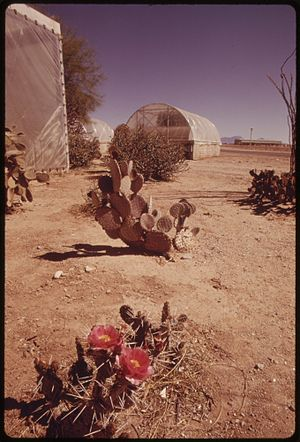 NORMAL DESERT ENVIRONMENT WITH CACTUS AT THE U...
