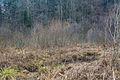 NSGOÖ n124 Neydhartinger Moor Jan 2015-0507.jpg