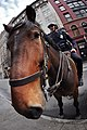 NYPD Snout (3428496207).jpg