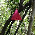 NZ trail marker.jpg