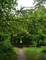 Naddniprianske Arboretum of Agriculture Institute of Southern Region 24 (YDS 2311).jpg