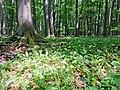 Nationalpark Hainich craulaer Kreuz 2020-06-03 4.jpg