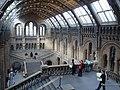 Natural History Museum - London - Flickr - srboisvert.jpg