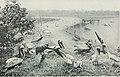 Natural history (1919) (14595157019).jpg