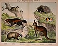 Natural history of the animal kingdom for the use of young people (Plate XII) (5974370443).jpg