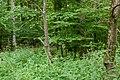 Naturbëschreservat «Beetebuerger Bësch»-103.jpg
