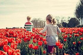 Nature-blossom-plant-sun-field-flower-734533.jpg