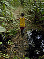 Nature Walk - Child and forest.jpg