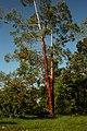 Natureza - panoramio - enioprado (1).jpg