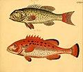 Naturgeschichte in Bildern mit erläuterndem Text (Taf. LXXVI) (6058670057).jpg